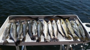 Trout and Redfish on the filet table after a 3/4 day charter!!!